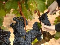 2 factores determinantes en la calidad de un vino