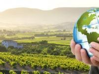 EcoSostenibleWine 2014, vino y medio ambiente