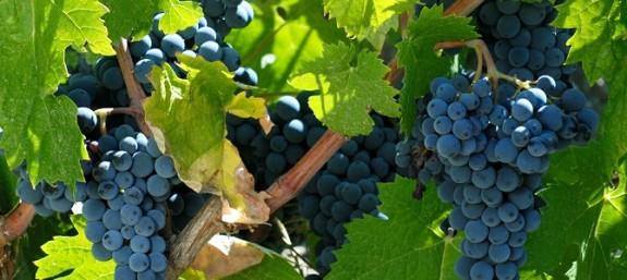 Radiografía del vino español: las cifras
