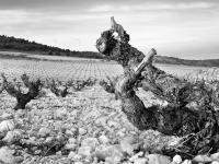 ¿Cómo influye el terruño o 'terroir' en el carácter de los vinos?