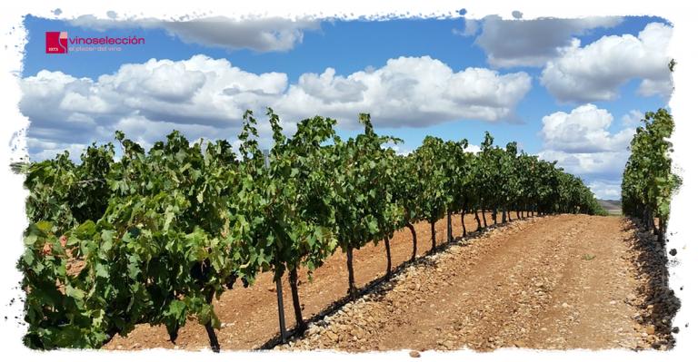 ¿Cómo se trabaja la viña? El ciclo de la vid y labores vitícolas