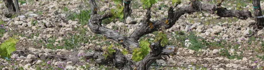 Lively Wines – Germán R. Blanco