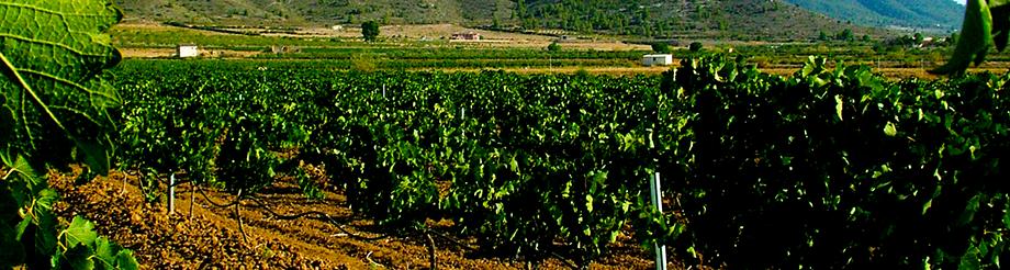 Bodegas y Viñedos Ecológicos Odum