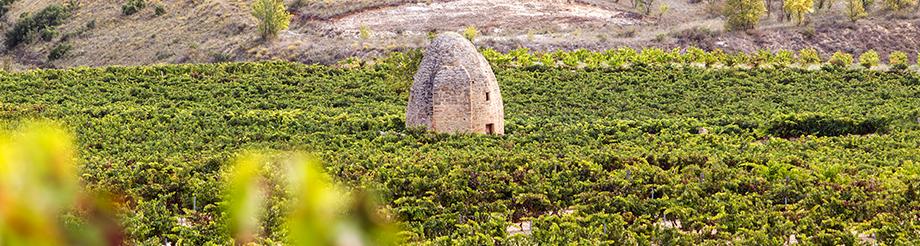 Viñedos Sierra Cantabria