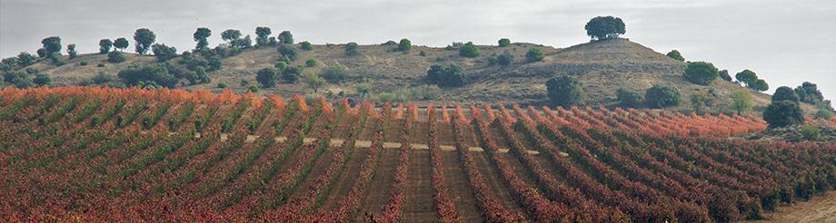 Bodegas Dehesa La Granja