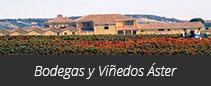 Viñedos y Bodegas Áster