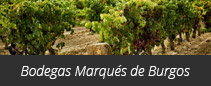 Bodegas Marqués de Burgos