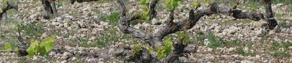 Lively Wines - Germán R. Blanco, el artesano que embotella paisaje