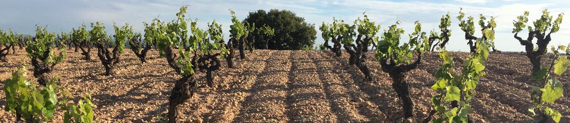 Viticultores de SanJuan Bautista & Valsangiacomo, la esencia mediterránea de la bobal