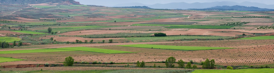 Bodegas y Viñedos Alcarreños, solos en la Alcarria
