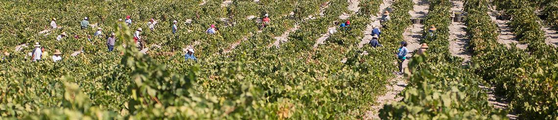 Carvajal Wines, la calidad por la vía de la originalidad