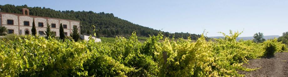 Bodega Matarromera, un icono del vino español