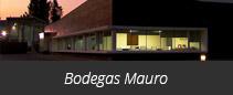Bodegas y Viñedos Monte Mayor