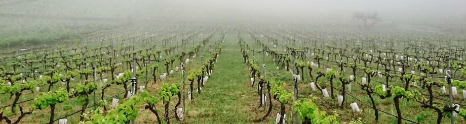 Suertes del Marqués, los vinos bajo el volcán